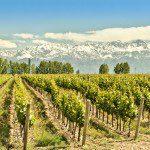 Exploring Argentina's vineyards