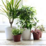 prepare your plants for cold weather