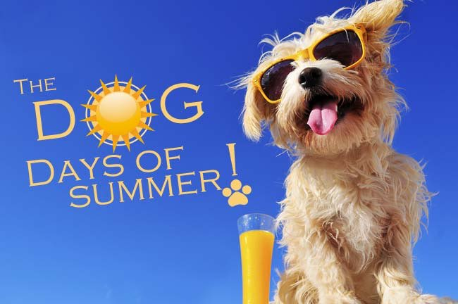 Dog Days Of Summer Winner Addison Magazine